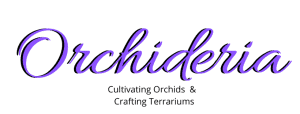 Orchideria Cultivating Orchids & Crafting Terrariums