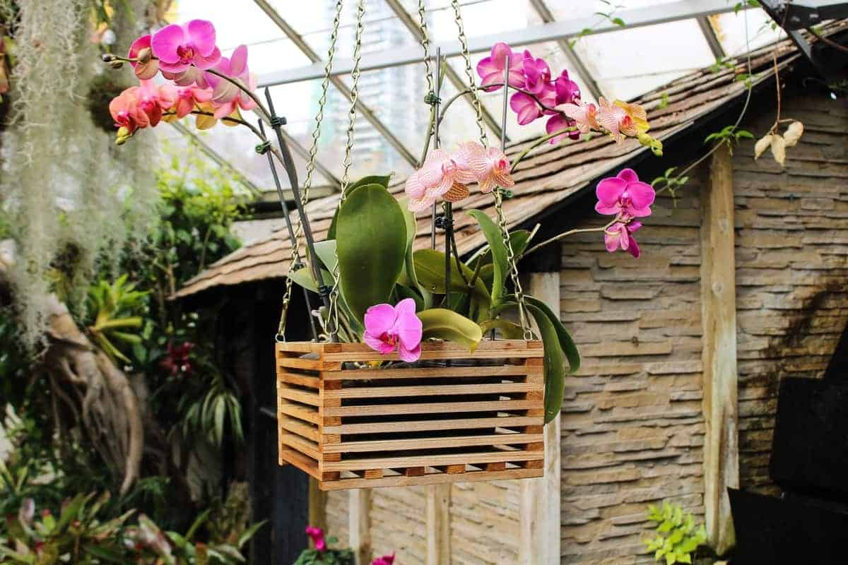 watering mounted orchids