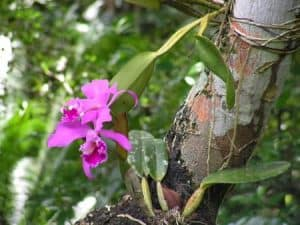 orchids on trees