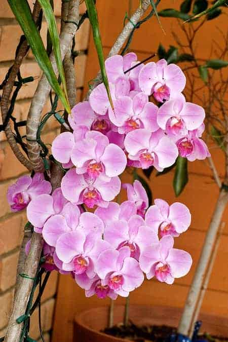 mounted orchids in trees
