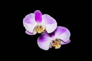 grow lights for orchids