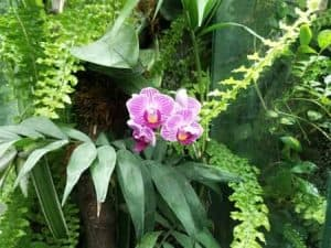orchid areal roots