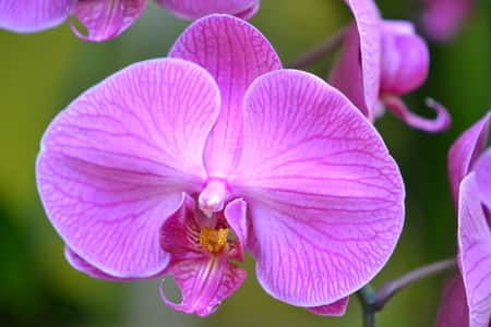 Moth Orchid Care for Novice