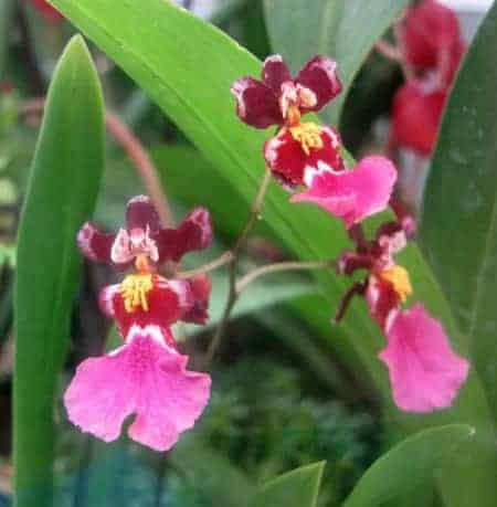 Orchid Smells