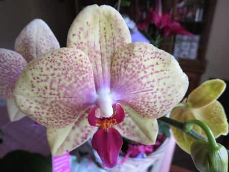 Pest Control Products for Orchids