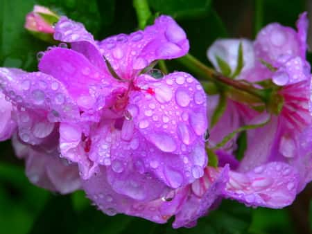 Best Water for Orchids
