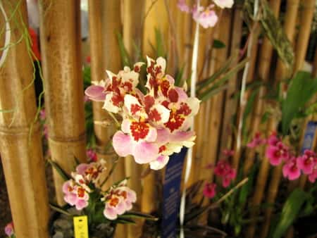 full Water Culture for Orchids