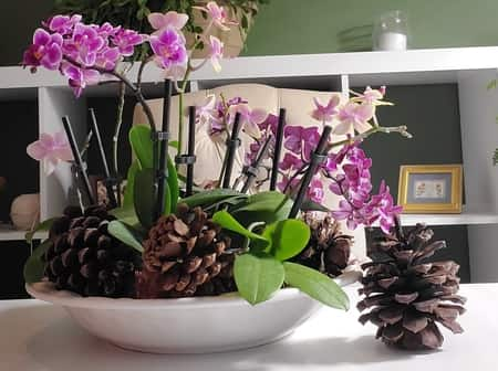Multip0le orchids in a basket ready to be hung
