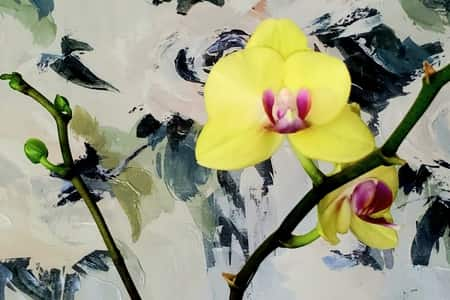 Orchid in Hydrogel