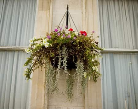 Orchids and other Flowers in a hanging basket