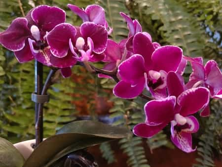 Signs of a Healthy Orchid