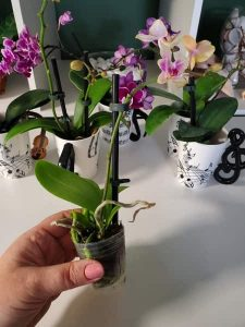 Super GLue Mounted Orchid