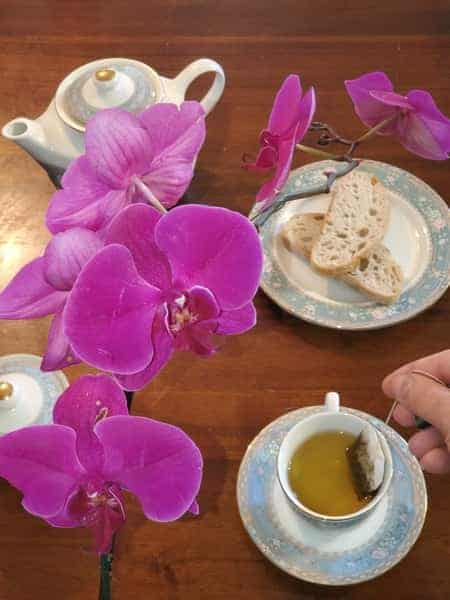 Phalaenopsis Orchid, Cup of Tea,  and a Teabag