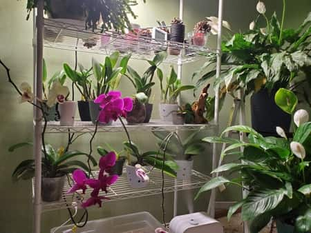 Air Quality with Orchids