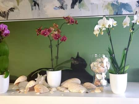 Cat behind Orchids