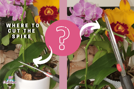 Cutting In between Orchid Nodes