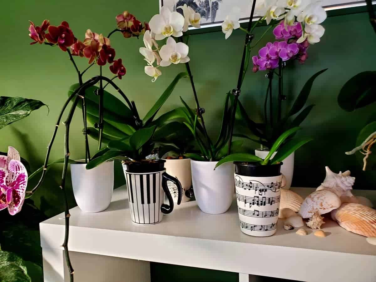 Orchids In Water Culture
