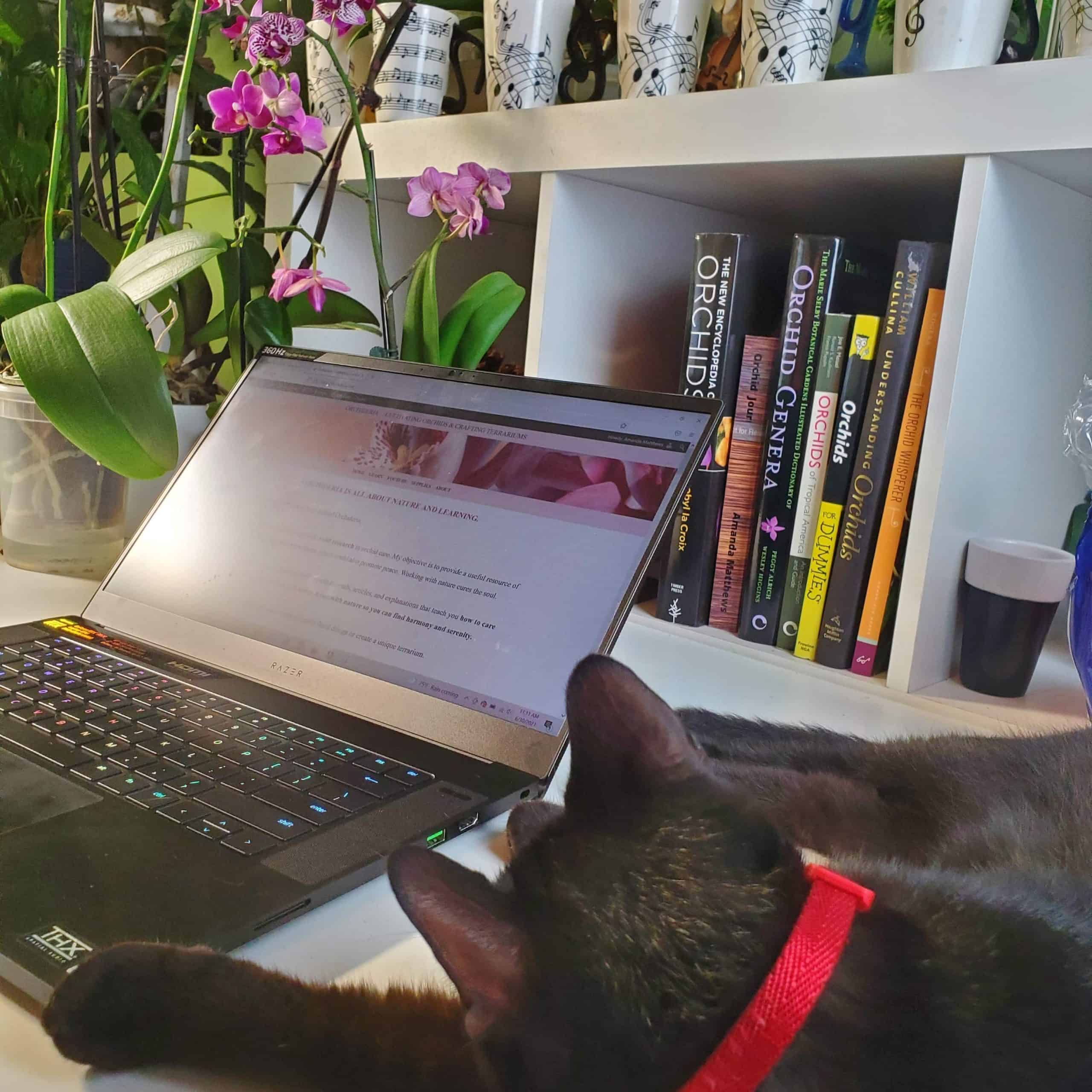 Cat by the laptop