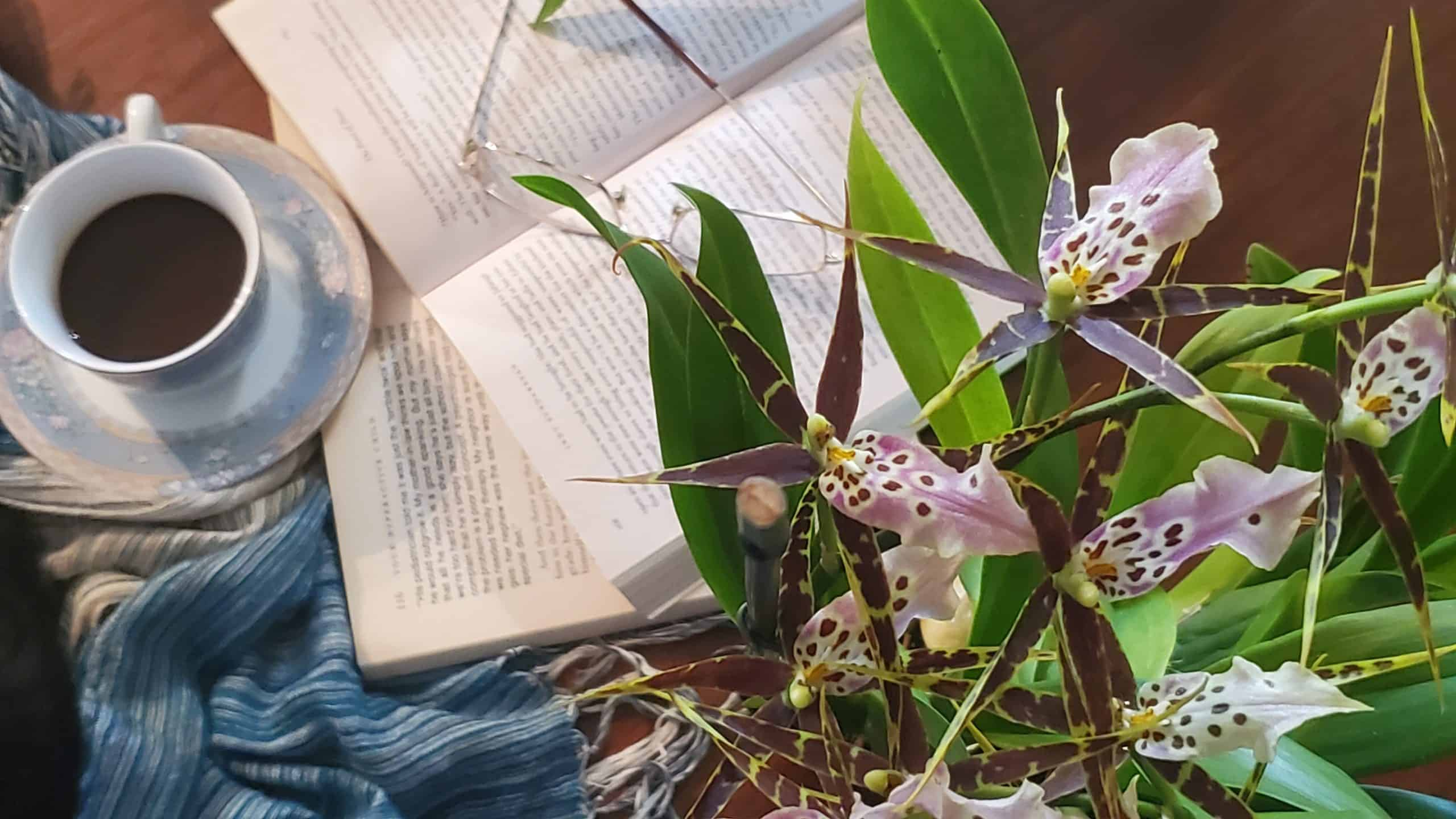 Orchid and Books